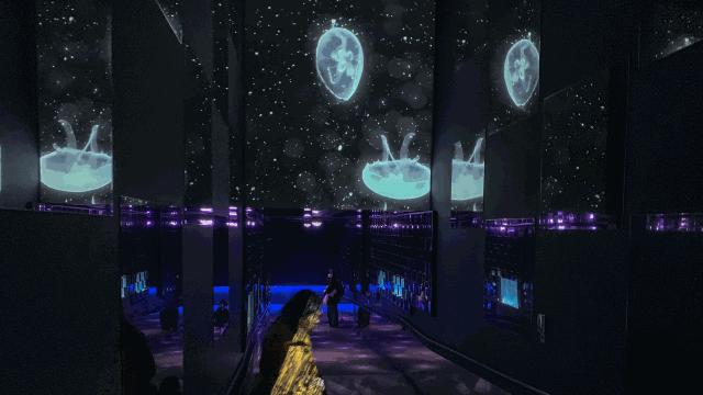 最新技術に世界も注目する、すみだ水族館「水とアートの融合で、…